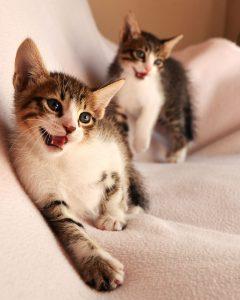 to_katte
